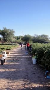 Rio Grande Community Garden