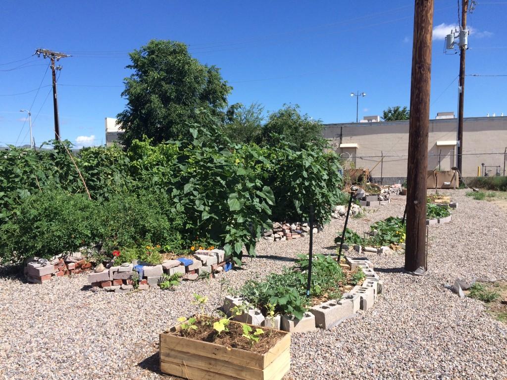 Garden July 2015